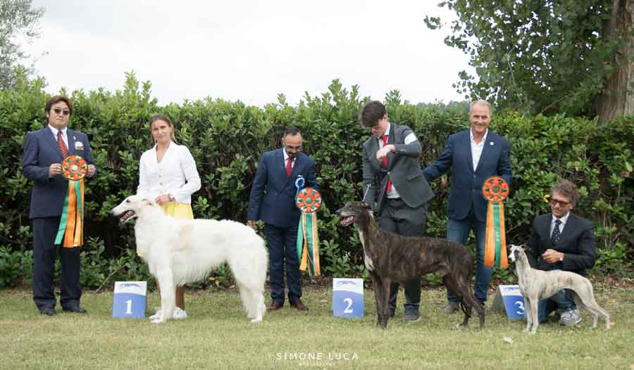 club del levriero best in show
