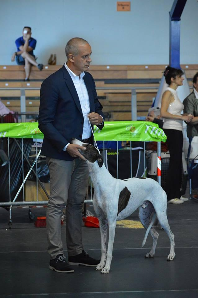 Allevamento Greyhound Kollaps