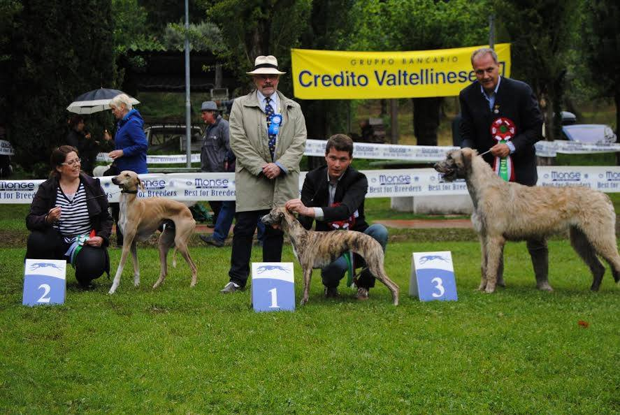 Padenghe sighthounds club whippet