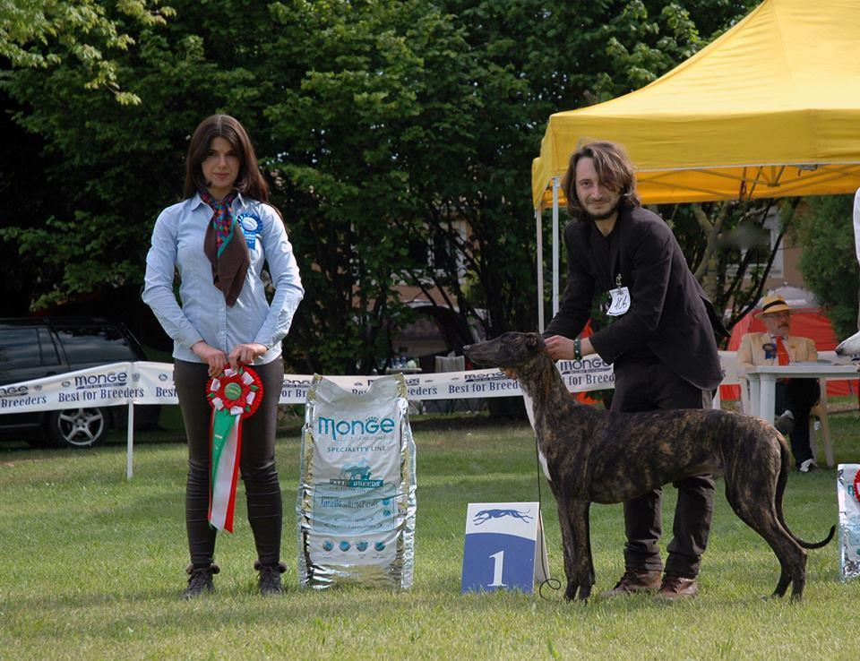Speciality Sighthound Club Padenghe (I)